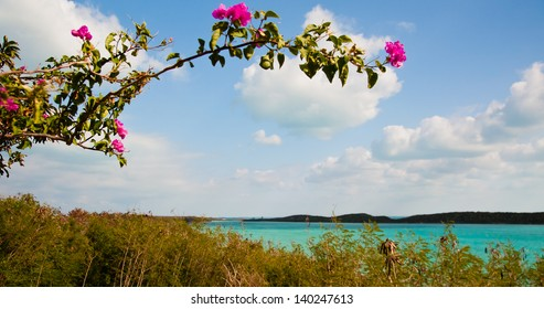 View of beautiful tropical waters framed by a bougainvillea branch and flowers.  copy space available