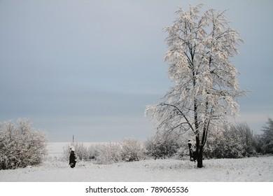 View of beautiful winter birch wood.