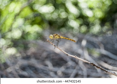 View of a beautiful yellow dragonfly on top of branch.