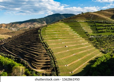View of the beautifull Torto river valley with vineyards and terraced slopes in the Douro Region, famous Port Wine Region, Portugal.