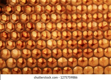 View of bee honeycombs against the light. Abstraction stained glass created by nature, bees.