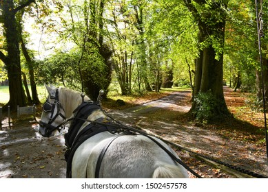 View from behind as a jaunting cart enters the Killarney National Park