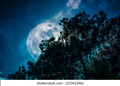 View from below. Beautiful night landscape. Silhouette of trees against night sky and bright super moon over serenity nature background. Outdoors at nighttime. The moon taken with my camera.