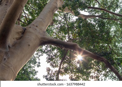 View from below, close to a large tall tree, which is covered with leaves during the day.