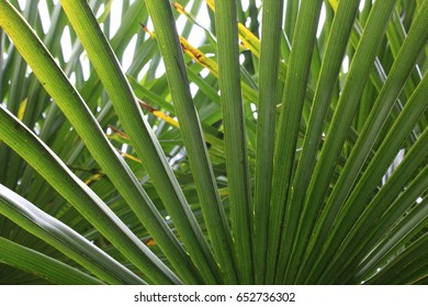 A view from below of palm fronds