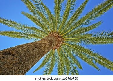 view from below a palm tree