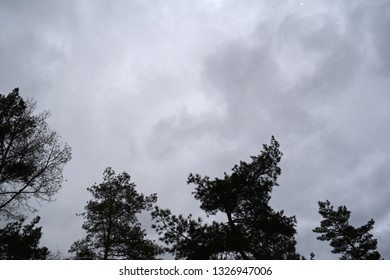 View from below through the dark trees to the cloudy sky