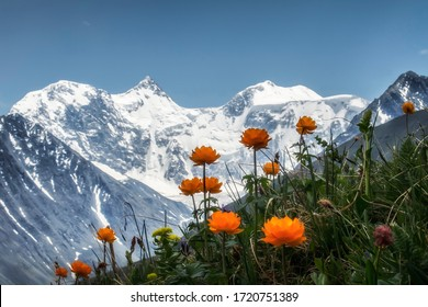 View of Belukha with mountain flowers in the foreground.