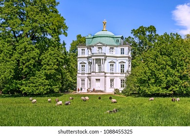 View of Belveder in Charlottenburg palace and sheep on the lawn in Berlin, Germany