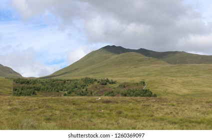View of Ben Lawers National Nature Reserve, and the Edramucky Trail clearly showing an area of regenerated native vegetation.
