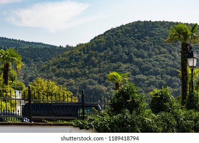 View of beutiful green hills in the historical city of heidelberg