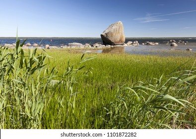 View at big stone (erratic boulder) over green plants at Baltic shore. Photographed in Kasmu, Estonia.