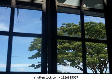 View of Big tree and the blue sky from a Broken Window of Abandoned House