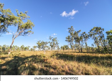 The view of biome Savanna in Australia field. Forests and grasslands in Townsville Australia - Image
