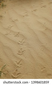 View of bird tracks in the sand