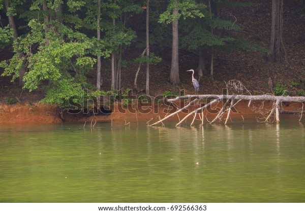 A view of a blue heron on Lake Norman in Troutman, North Carolina.