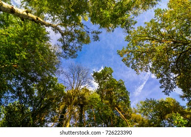 View Up to the blue sky with some clouds in a Autumn Forest in Germany