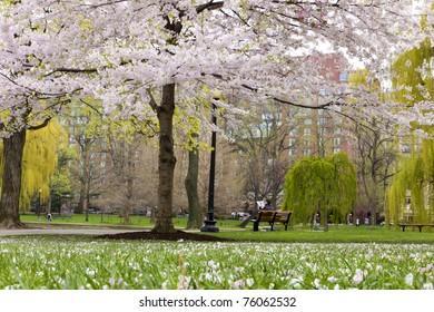 View of Boston Public Garden in Boston, Massachusetts - USA in the Spring season.