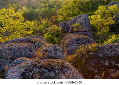 A view of the boulders surrounded by a dense forest in the rays of sunrise.