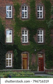 View of brick house facade with red door and windows, covered by overgrown ivy