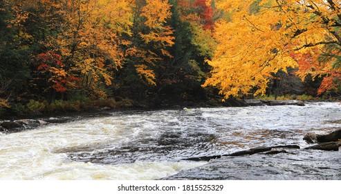 View of Brilliant foliage and rapids at Algonquin Provincial Park, Canada