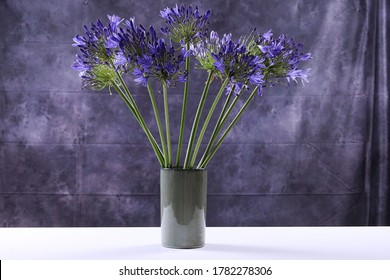 A view of a bunch of Agipanthus flowers which also known as the African lily in a ceramic vase