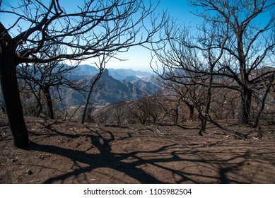 View of the burnt land in Cruz de Tejeda in Gran Canaria, Spain