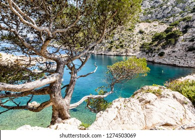 View of the calanque de Morgiou on the mediterranean shore between Marseille and Cassis in the south of France, with turquoise water and a stone pine tree in the foreground on a sunny spring day.