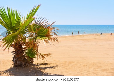 a view of a calm beach in the mediterranean sea with a palm tree in the foreground and some unrecognizable people in the background