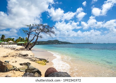 View of the Caribbean island of Martinique in French Polynesia. The Martinique coast with turquoise water, palm trees and a gorgeous beach.