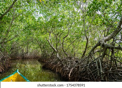 A view from Cartagena's Mangrove Swamp, Colombia