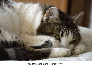 view of cat lying on a bed and looking
