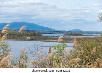 View of Catskill Mountains and Hudson River near Rhinebeck, NY. Soft focus Reeds in the foreground with a Dramatic Sky, and Sailboat on the river.