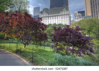View in Central Park of 59th street and the Plaza hotel with Japanese maple trees in the foreground