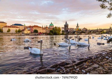 A view of Charles Bridge and the Old Town from the Mala Strana side of the river. Large amounts of swans can be seen.