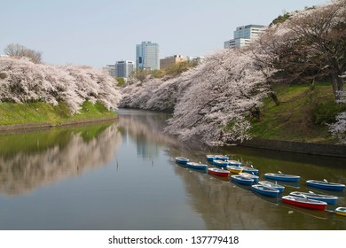 view of cherry blossoms in canal, chidorigafuchi park in Tokyo Japan