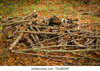 A view of chopped branches piled on the ground in an autumn forest.