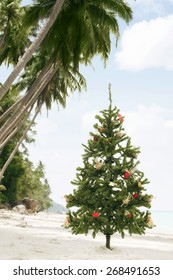 view of Christmas tree on wild empty tropical beach
