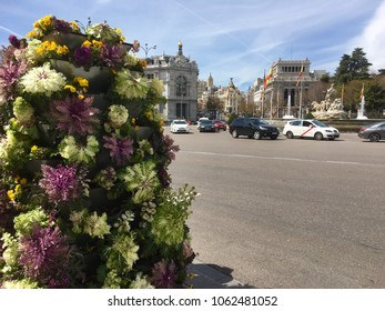 View of Cibeles Fountain on sunny day in early spring, Madrid, Spain, Europe 1-4-2018