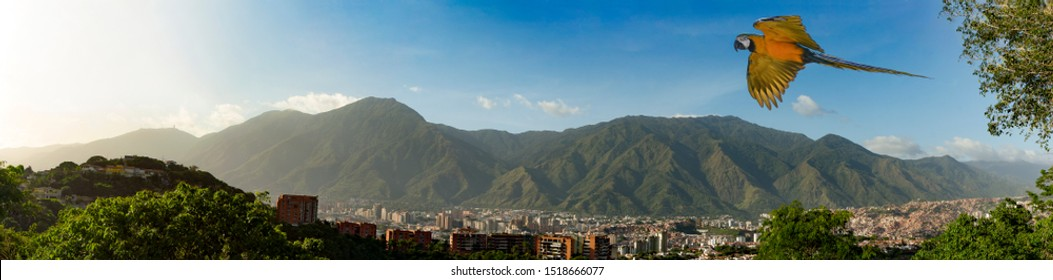 View of the city of Caracas and its iconic mountain el Avila or Waraira Repano and flying macaw.