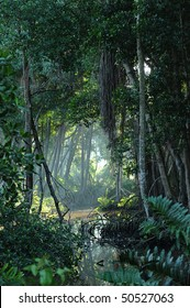 View of a clearing in a tropical jungle forest in Dominican Republic