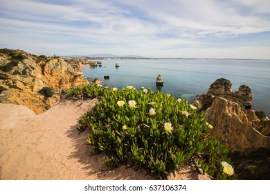View from a cliff in Lagos with flowers in Portugal