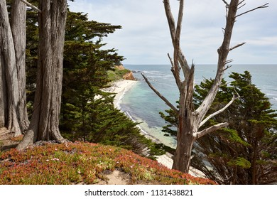 View from Cliff through Cypress Trees onto a Beach on the Northern California Coast