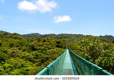 View of Cloud Forest Canopy And Canopy Walkway, Monteverde, Costa Rica