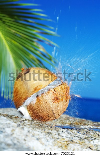 view of coconut getting cracked against shore boulder