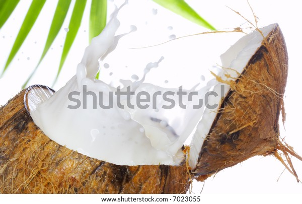 view of coconut milk splash isolated on white