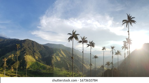 A view of the Cocora Valley at sunset with its distinctive wax palm trees