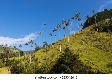 View of the Cocora Valley (Valle del Cocora) in Colombia, South America
