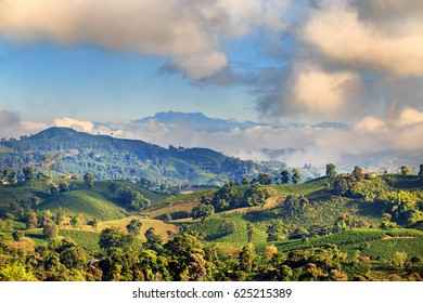 View of a Coffee plantation near Manizales in the Coffee Triangle of Colombia with the Nevado del Ruiz Volcano in the background.