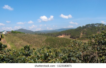View of the coffee plantation in the vicinity of Dalat. Vietnam